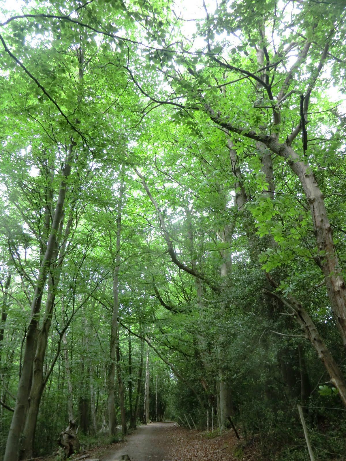 CIMG8584 Through Hurst Wood