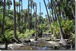 Prehistoric swamp-4