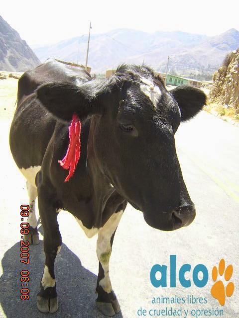Asistencia Huancavelica por terremoto 2007 (4)