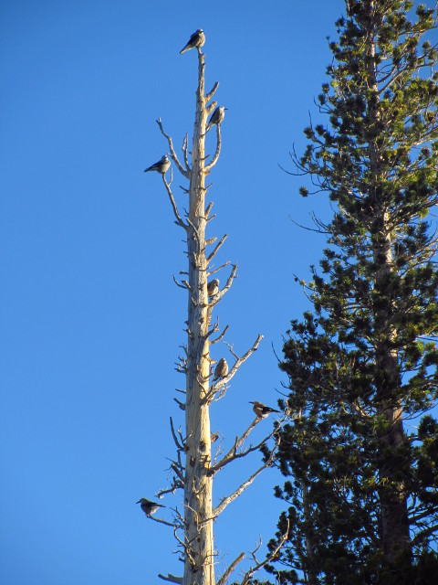birds on a dead tree