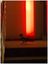 Одна хитрая воронежская ворона зачем-то ходит по ночам к банкомату 1