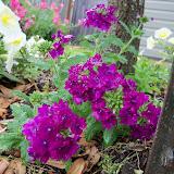Gardening 2012 - 115_1387.JPG