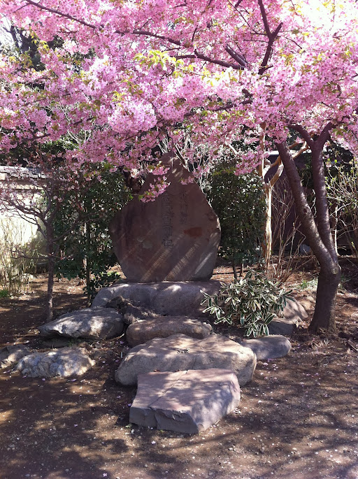 araiyakushi nakano sakura
