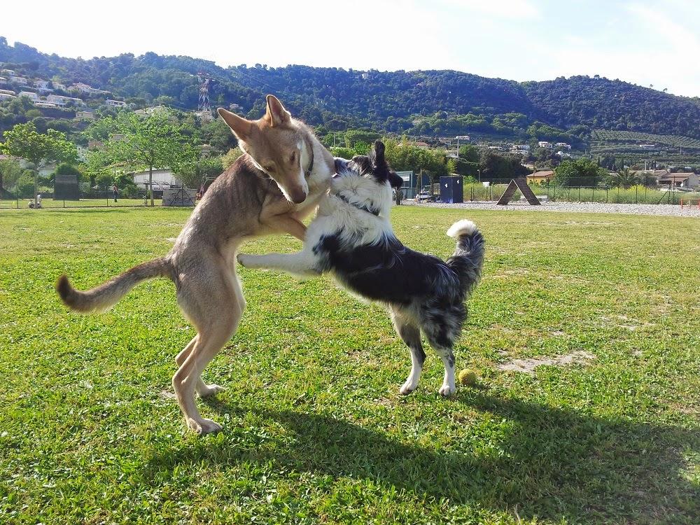 Photographie de chiens & chats - Page 2 20140426_172638