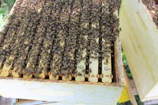 PLC Honey Fiesta 7/10/16 - IMG_3590.JPG