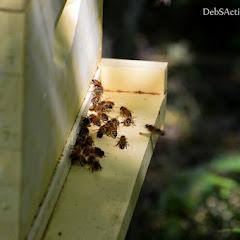 PLC Honey Fiesta 7/10/16 - i-ChLGVDx-X3.jpg