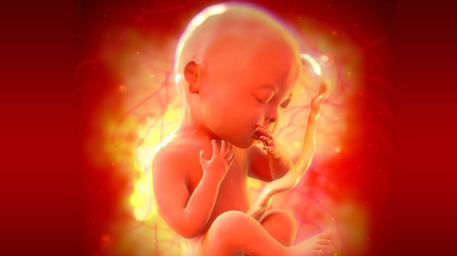 Cuộc thảm sát những thai nhi trên toàn thế giới