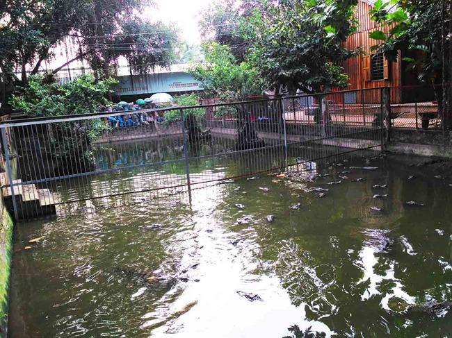 taman buaya di sungai mekong