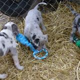 Thelma & Garths 3/21/12 litter - SAM_3226.JPG