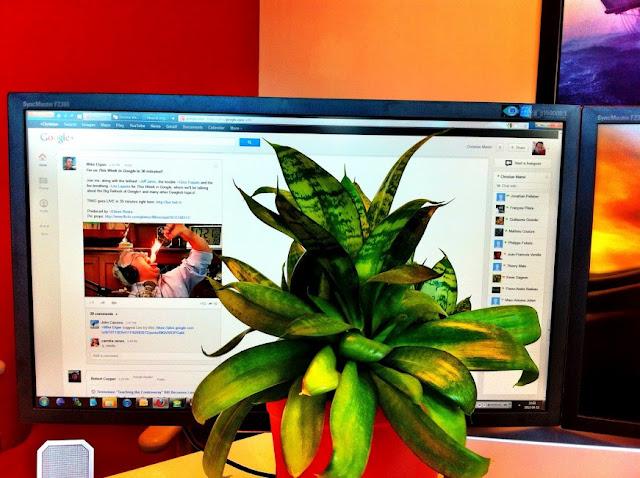 plant #whitespace google plus