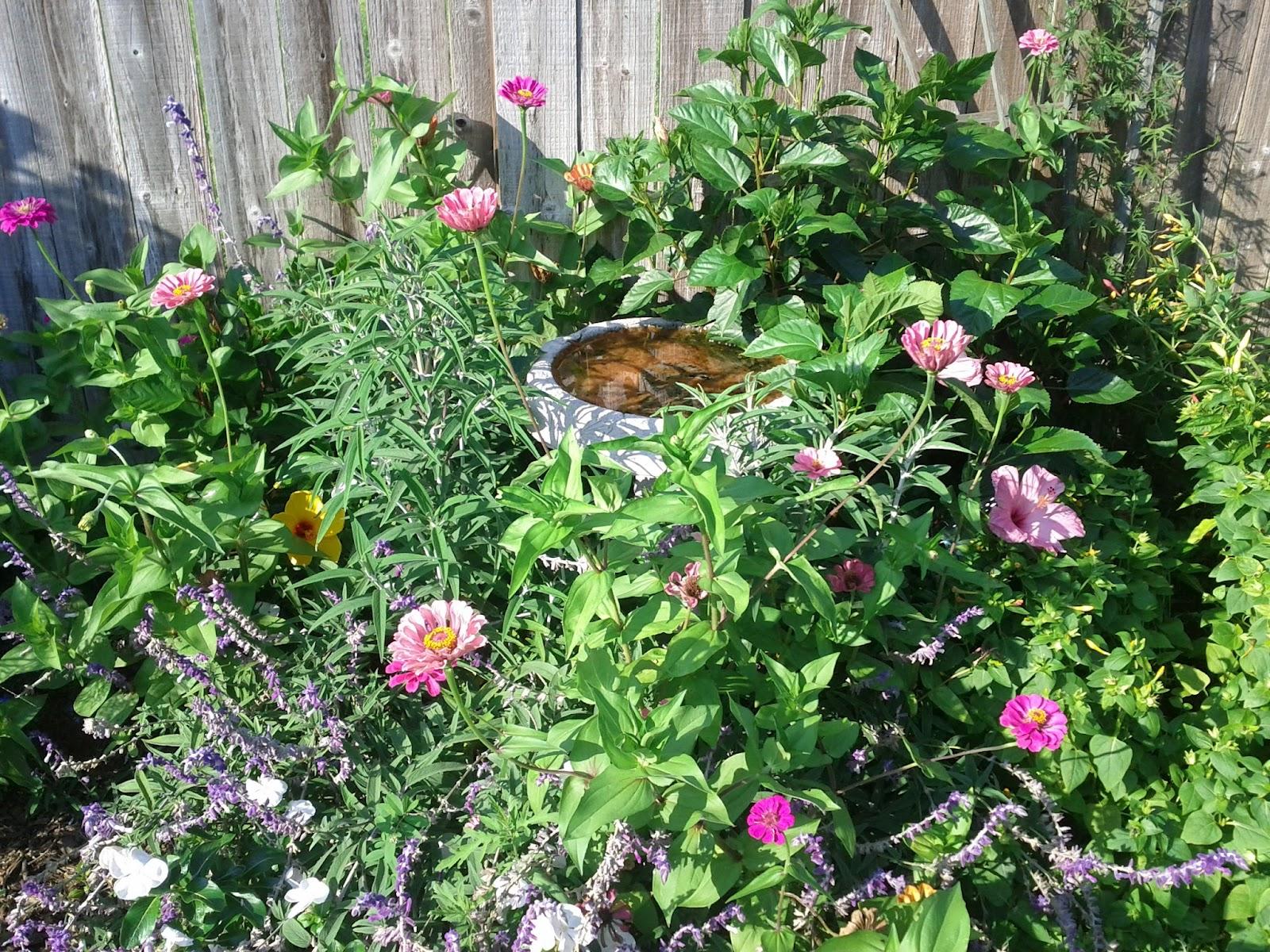 Gardening 2012 - IMG_20120520_174244.jpg