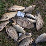 20150418_Fishing_Ostrog_046.jpg