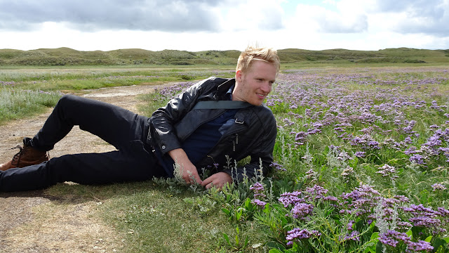 enjoy the purple sea lavenders at De Slufter Nation Park on Texel in Texel, Noord Holland, Netherlands