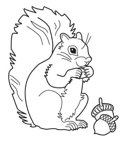 Geography Blog Grey Squirrel Coloring Page