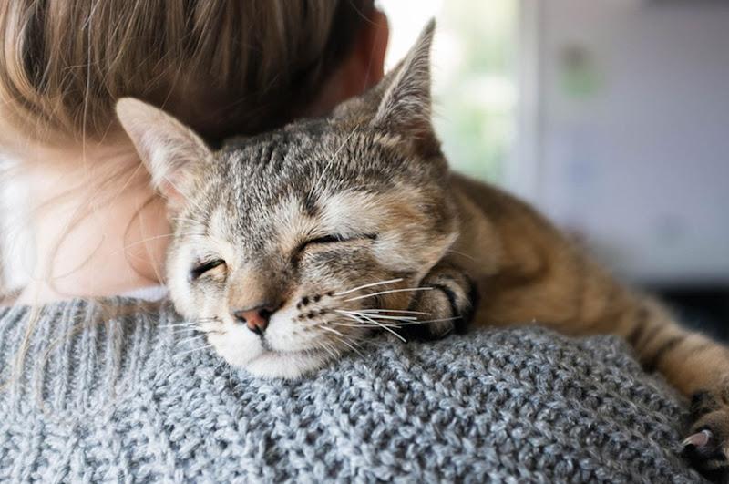 Felix Dan Dora Dua Ekor Kucing Terbiar Yang Lahir Tanpa Kelopak Mata Merayau-rayau Di Australia, Stray Cats, Kucing Terbiar, Kucing, Cat, Meow, Animal Shelter