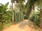 Coconut Palms & Bananas line Tapovan Driveway