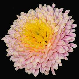 BI COLOURED by SANGEETA MENA  - Flowers Flowers in the Wild