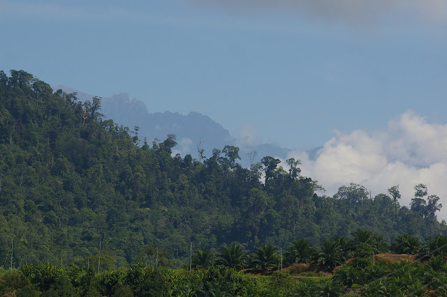 Le Mont Kinabalu à l'est de Ranau (Sabah, Malaisie), 1er août 2011. Photo : J.-M. Gayman