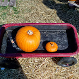 Pumpkin Patch - 115_8267.JPG