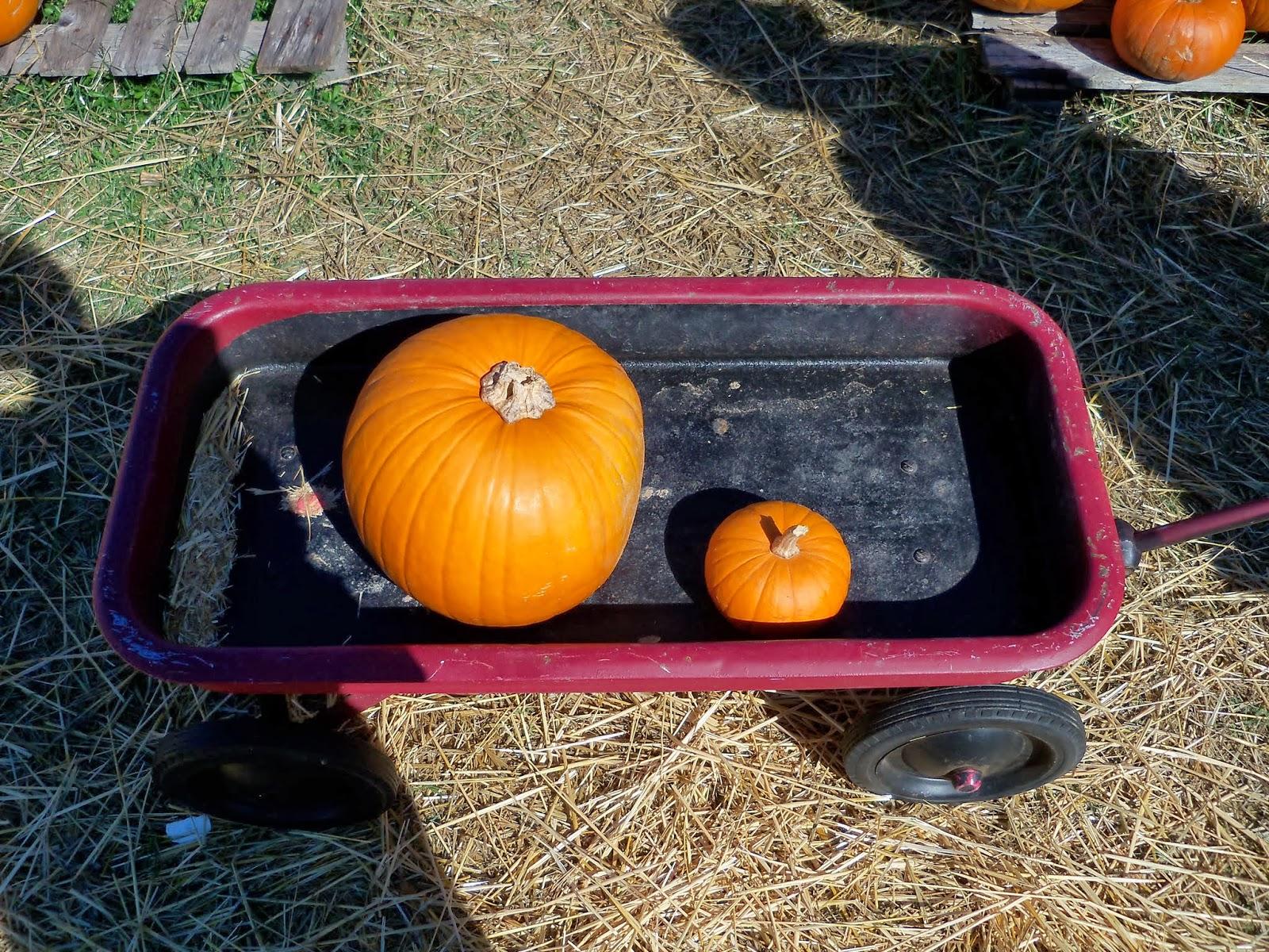 Pumpkin Patch - 115_8267.JPG
