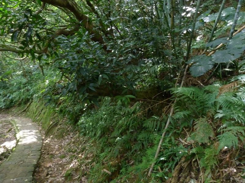 TAIWAN Taipei Dahu Park et dans le quartier de SHIH CHIEN University - P1260229.JPG