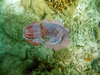 cuttle fish.5.jpg