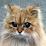 Will Kaufhold's profile photo