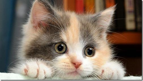 22 fotos de gats (21)