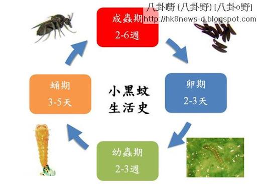小黑蚊防治法