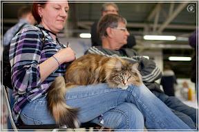 cats-show-24-03-2012-fife-spb-www.coonplanet.ru-103.jpg