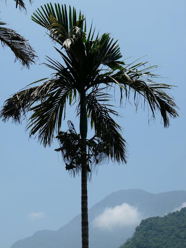 TAIWAN .Hualien 2009 LIYU lake Monet garden guest house - P1090645.JPG