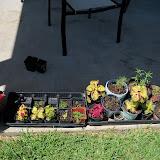 Gardening 2010, Part Three - 101_4482.JPG