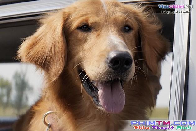 Mục Đích Sống Của Một Chú Chó - Image 2