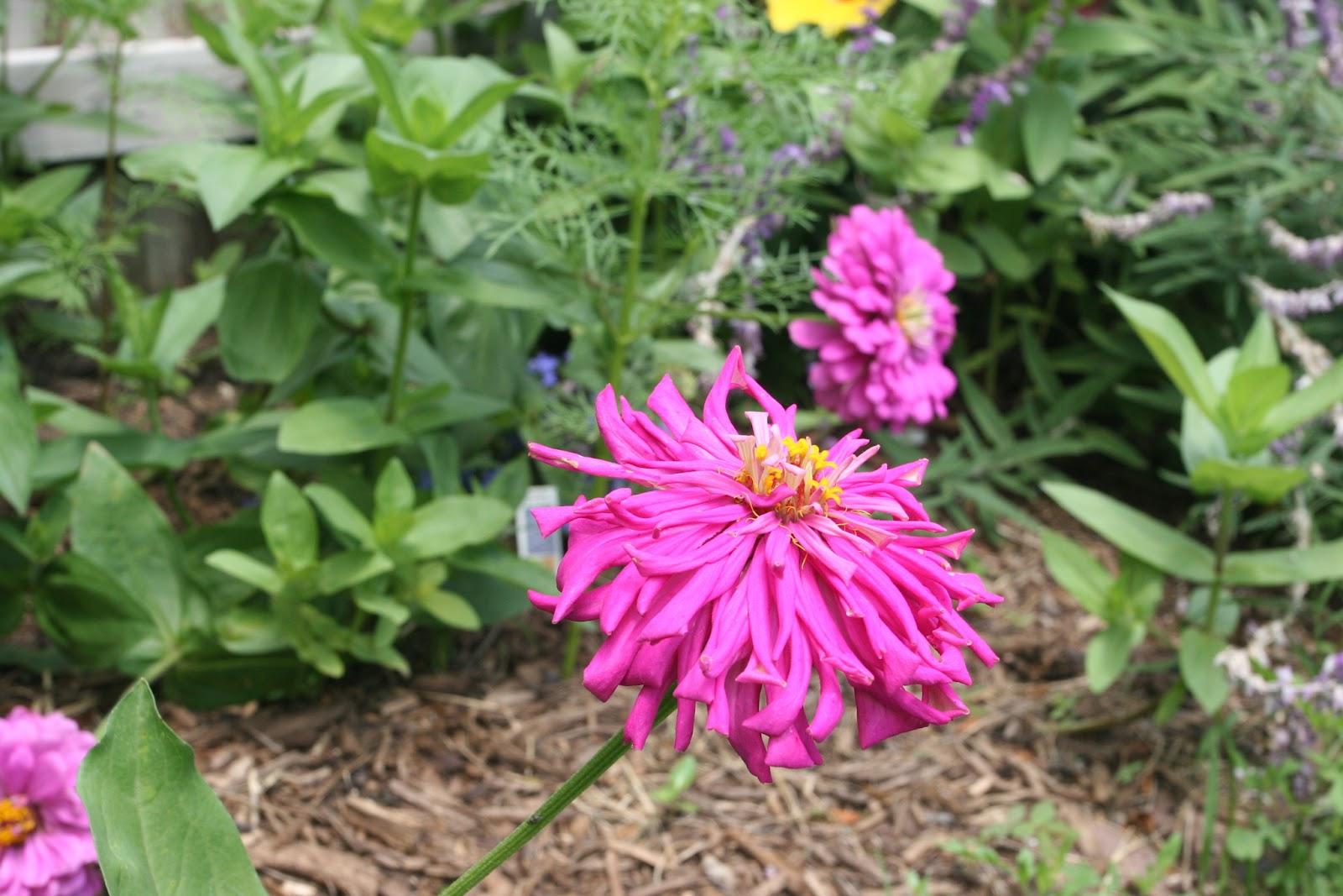 Gardening 2012 - IMG_3874.JPG