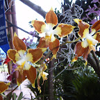 Exposición Orquídeas 2005