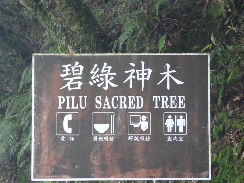 TAIWAN. Weekend Randonnée, Taipei à  Hehuanshan en passant par Puli, retour par les gorges de Taroko - P1280971.JPG