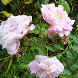 Gardening 2012 - 115_1647.JPG