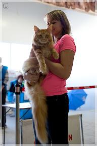 cats-show-25-03-2012-fife-spb-www.coonplanet.ru-023.jpg