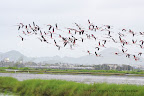 Migratory Birds in Vasai | Mumbai