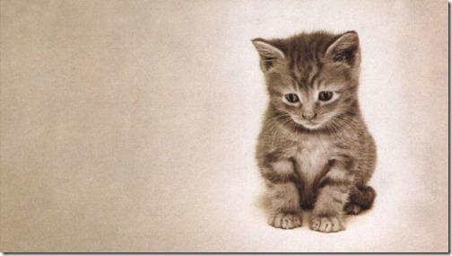 fotos de gatos (6)