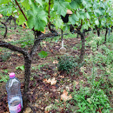 2013 vendanges du chardonnay - 2013%2B09%2B28%2BGuimbelot%2Bvendanges%2Bdu%2BChardonnay%2B158.jpg