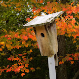 bluebird-house_MG_0595-copy.jpg