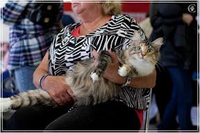 cats-show-24-03-2012-fife-spb-www.coonplanet.ru-105.jpg