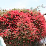Цветы в Тель Авиве.JPG