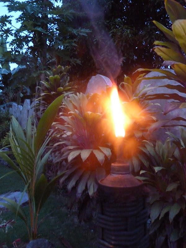 Dauin, Dumaguete, APO Island (Negros) - philippines%2Bdeux%2B674.JPG