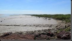170528 037 Derby Wharf Mangroves