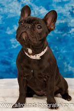 Huisdierreportage Hondendag Uden Dierendag (4 oktober 2008) - 23