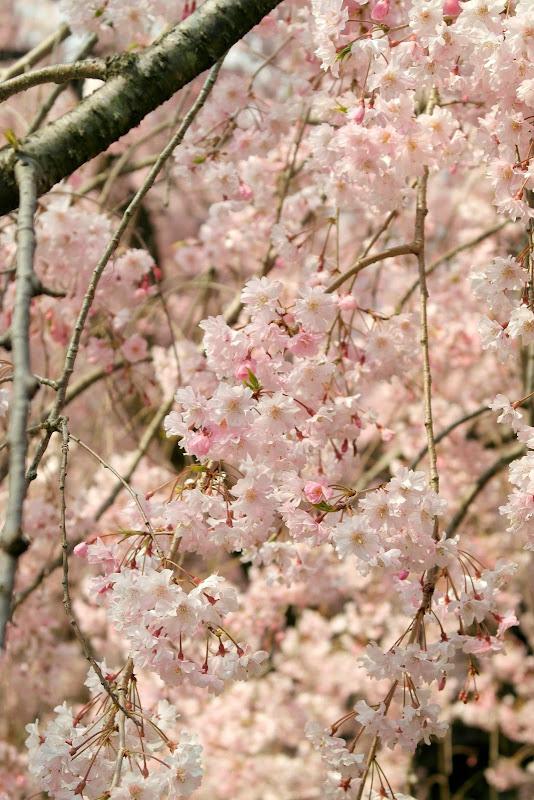 2014 Japan - Dag 10 - janita-SAM_6589.JPG