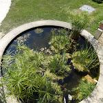 Arboretum de la Vallée-aux-Loups : bassin aux papyrus