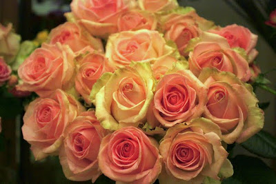 Roses from the flower shop in the Corinthia Hotel in London